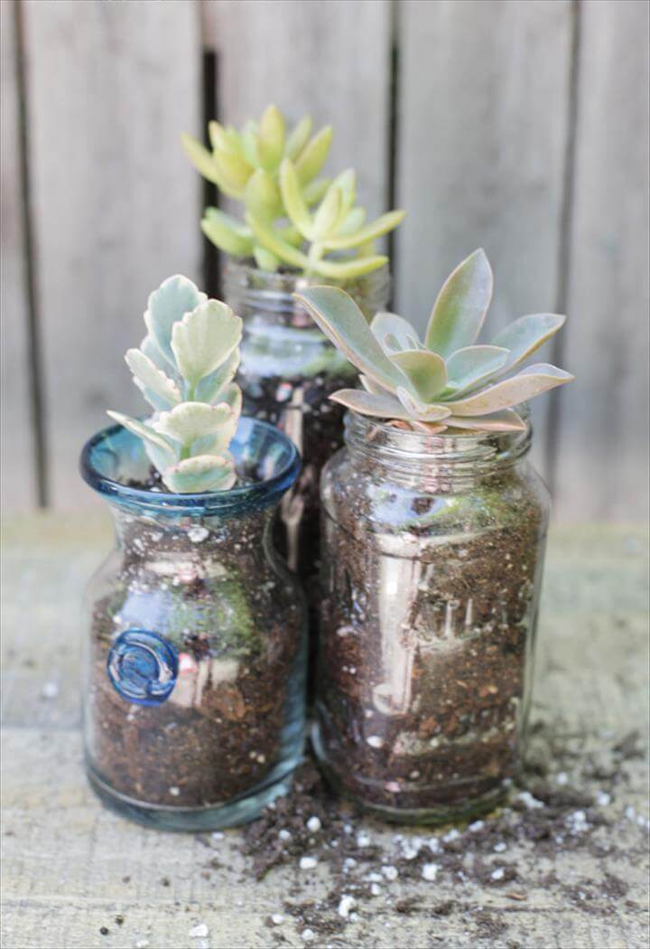 The Blissful Bee planted succulents in recycled jars to bring a little green indoors