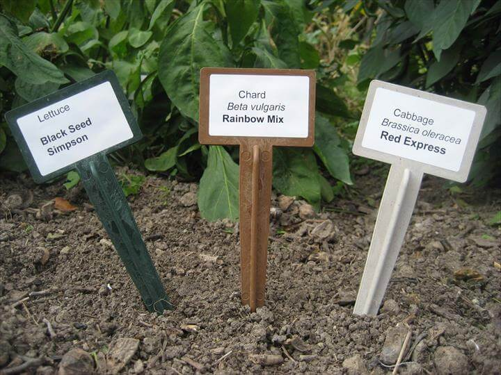 Plant Labels for the Enthusiastic Gardener