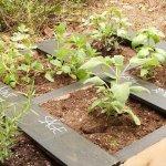 15 Handmade Pallet Garden Planters