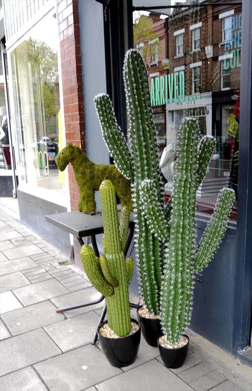 cactus pillarboxblue