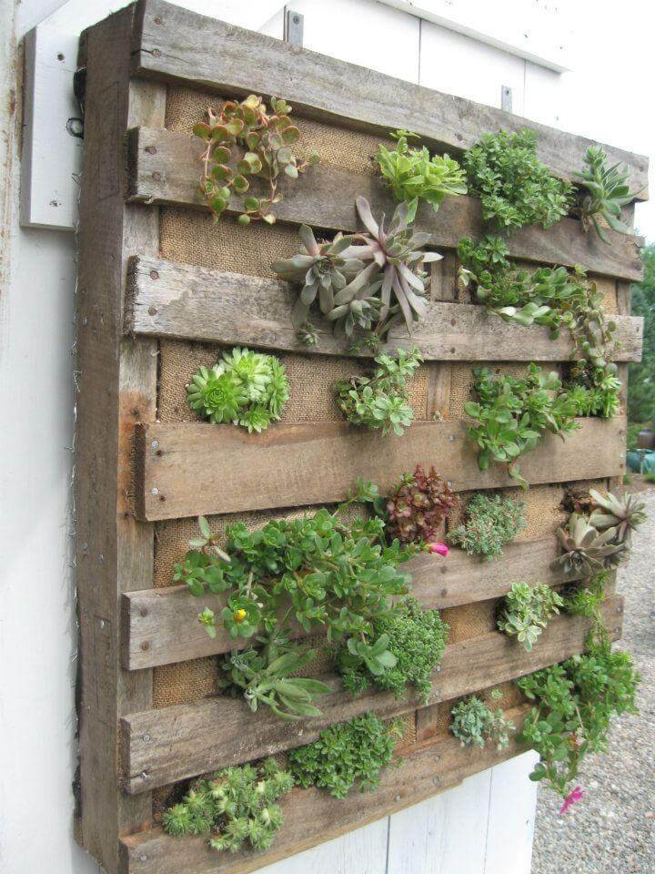 16 Awesome Pallet Garden Planter Ideas DIY to Make : Succulent Vertical Pallet Planter from www.diytomake.com size 720 x 960 jpeg 135kB
