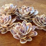 Beautiful Blooming Flowers Constructed from Shells