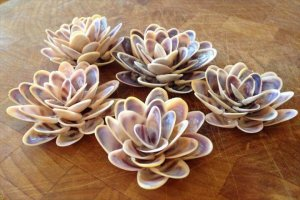12 Ideas About Sea Shell Projects