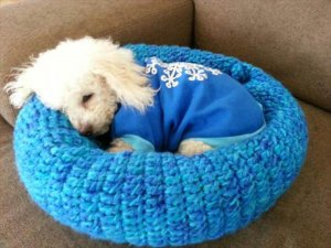 15 Amazing Crocheted Pet Bed Design