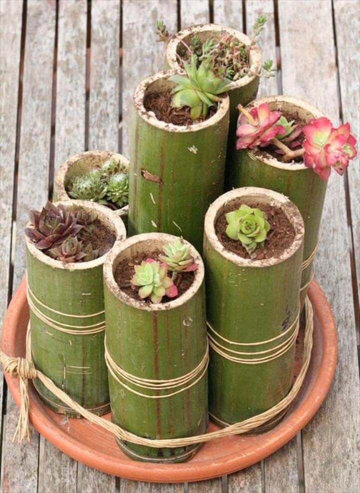 bamboo planters