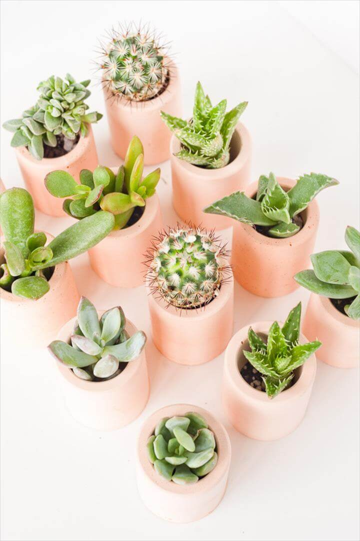plaster planters