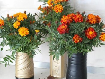 DIY flower vase out of plastic bottles