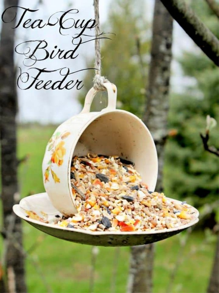 DIY Amazing Tea Cup Feeder