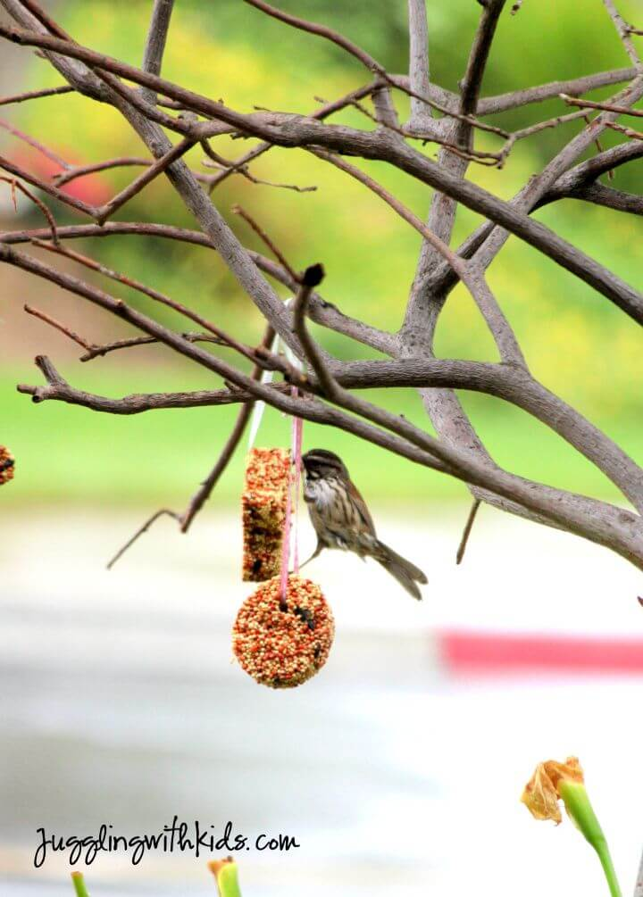 DIY Cookie Cutter Bird Feeder Tutorial