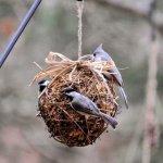 Grapevine Suet Ball Feeder DIY Tutorial