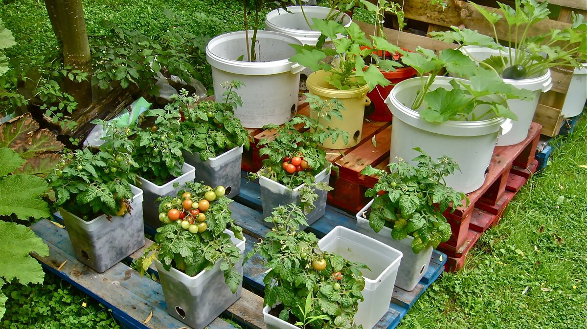 4 Best DIY Container Gardening Projects