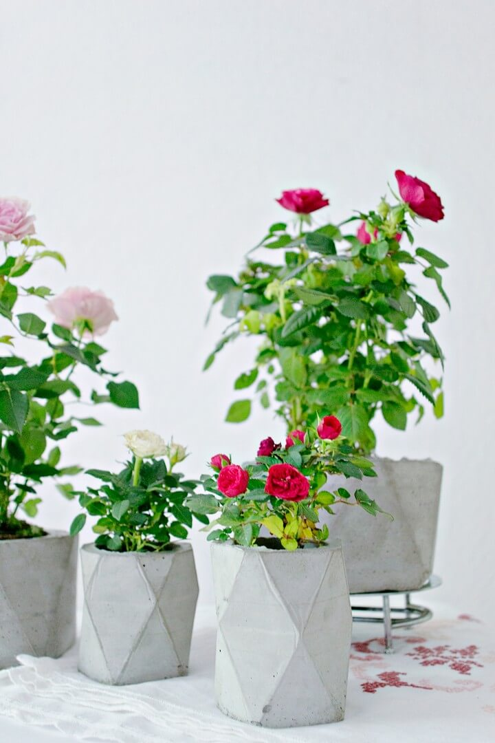 DIY Geometric Concrete Planter, diy planter, planter ideas, diy planters, diy planter ideas, diy planter box, diy planter stand, diy planter box plans, diy planter pots, diy planter insert, diy planter box ideas, diy planter bench, diy planter box bunnings, diy planters concrete, diy planter box nz, diy planters wood, diy planter fountain, diy planter hanger, diy planter wall, diy planter box indoor, diy planter bed, diy planter shelf, diy planter indoor, diy planter around post, diy planter around tree, diy planter and candle holder, diy planter and trellis, diy aquarium planter, diy address planter box, diy address planter, diy apartment planter, diy angled planter box, diy animal planter, diy planter box australia, diy planter box and trellis, diy emersed aquarium planter, diy plastic animal planter, diy bench and planter, diy carte a planter, diy planter box pallet, diy planter box kit, diy planter box easy, diy planter basket, diy planter box bench, diy planter bag, diy planter box concrete, diy planter box cheap, diy planter box balcony, diy planter bench plans, diy planter box liner, diy planter box window, diy planter cover, diy planter concrete, diy planter coffee table, diy planter cement, diy planter containers, diy planter caddy, diy planter clay, diy planter & candle holder, diy planter centerpiece, diy planter chair, diy planter cart, diy planter crafts, diy planter christmas, diy cedar planter box, diy concrete planter box, diy concrete planter with drainage, diy ceramic planter, diy cedar planter, diy concrete planter molds, diy corn planter, diy planter designs, diy planter decor, diy planter drip tray, diy planter drainage, diy planter decking, diy dinosaur planter, diy deck planter box, diy driftwood planter, diy deck planter box plans, diy dino planter, build planter decking, diy planter box designs, diy planter box drainage, diy decorative pots, build deck planter box, diy upside down planter, diy planter box for deck railing, diy planter box home depot, diy 55 gallon drum planter, diy planter easy, diy planter edging, diy elevated planter box, diy easy planter box, diy elevated planter, diy evergreen planter, diy elevated planter box plans, diy elephant planter, diy eggling planter, diy elevated planter bed, diy easy planter stand, diy eco planter, diy electric planter drive, diy hanging planter easy, build elevated planter box, build easy planter box, build elevated planter, diy empty pots, diy west elm planter, easy diy elevated planter box, diy planter from pallet, diy planter feet, diy planter for bamboo, diy planter feet for pots, diy planter for succulents, diy planter fire pit, diy planter filler, diy planter from decking, diy planter for balcony, diy planter from garbage can, diy planter for herbs, diy planter for strawberries, diy fabric planter, diy face planter, diy flower planter box, diy fiberglass planter, diy floating planter, diy flower planter, diy fence planter, diy planter garden, diy planter gift, diy planter greenhouse, diy planter gift ideas, diy garden planter box, diy galvanized planter, diy gabion planter, diy geometric planter, diy garden planter ideas, diy galvanized planter box, diy garlic planter, diy groot planter, diy gutter planter, diy glass planter, diy garden planter plans, diy guitar planter, diy giant planter, diy gold planter, diy garden planter and bird bath, diy garden planter bench, diy planter hanging, diy planter holder, diy planter house number, diy planter heads, diy herb planter, diy herb planter box, diy hanging planter box, diy hanging planter rope, diy hanging planter stand, diy hanging planter macrame, diy hanging planter outdoor, diy hexagon planter, diy hydroponic planter, diy hanging planter ideas, diy hanging planter bags, diy holiday planter, diy herb planter indoor, diy hanging planter kit, diy herb planter ideas, diy planter ideas pinterest, diy planter irrigation, diy planter ideas with wood, diy indoor planter box, diy indoor planter ideas, diy indoor planter stand, diy indoor planter box ideas, diy ikea planter, diy wall planter ideas, diy succulent planter ideas, diy wall planter indoor, diy christmas planter ideas, diy outdoor planter ideas, diy large planter ideas, diy jute planter, diy jab planter, diy jeans planter, diy jellyfish planter, diy jute planter bag, diy planter milk jug, diy jiffy pots, build jd planter, diy mason jar planter, diy mason jar planter box, diy hanging mason jar planter, diy planter kit, diy kitchen planter, diy cat planter, diy planter box kits, diy succulent planter kit, diy herb planter kitchen, diy planter liner, diy planter litter box, diy planter ladder, diy planter large, diy planter light post, diy planter light pole, diy planter legs, diy plant labels, diy planter lights, diy planter lining, diy planter letters, diy large planter boxes, diy long planter box, diy letter planter box, diy log planter, diy levitating planter, diy long planter, diytomake.com