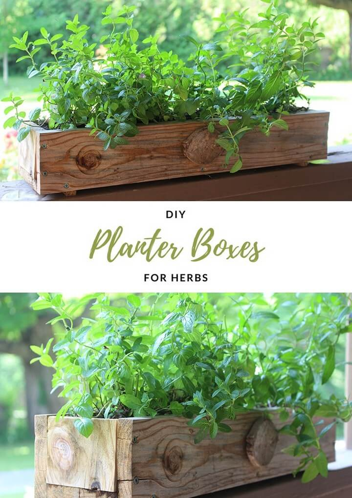 DIY Planter Boxes for Herbs How to make a planter box, diy planter, planter ideas, diy planters, diy planter ideas, diy planter box, diy planter stand, diy planter box plans, diy planter pots, diy planter insert, diy planter box ideas, diy planter bench, diy planter box bunnings, diy planters concrete, diy planter box nz, diy planters wood, diy planter fountain, diy planter hanger, diy planter wall, diy planter box indoor, diy planter bed, diy planter shelf, diy planter indoor, diy planter around post, diy planter around tree, diy planter and candle holder, diy planter and trellis, diy aquarium planter, diy address planter box, diy address planter, diy apartment planter, diy angled planter box, diy animal planter, diy planter box australia, diy planter box and trellis, diy emersed aquarium planter, diy plastic animal planter, diy bench and planter, diy carte a planter, diy planter box pallet, diy planter box kit, diy planter box easy, diy planter basket, diy planter box bench, diy planter bag, diy planter box concrete, diy planter box cheap, diy planter box balcony, diy planter bench plans, diy planter box liner, diy planter box window, diy planter cover, diy planter concrete, diy planter coffee table, diy planter cement, diy planter containers, diy planter caddy, diy planter clay, diy planter & candle holder, diy planter centerpiece, diy planter chair, diy planter cart, diy planter crafts, diy planter christmas, diy cedar planter box, diy concrete planter box, diy concrete planter with drainage, diy ceramic planter, diy cedar planter, diy concrete planter molds, diy corn planter, diy planter designs, diy planter decor, diy planter drip tray, diy planter drainage, diy planter decking, diy dinosaur planter, diy deck planter box, diy driftwood planter, diy deck planter box plans, diy dino planter, build planter decking, diy planter box designs, diy planter box drainage, diy decorative pots, build deck planter box, diy upside down planter, diy planter box for deck railing, diy planter box home depot, diy 55 gallon drum planter, diy planter easy, diy planter edging, diy elevated planter box, diy easy planter box, diy elevated planter, diy evergreen planter, diy elevated planter box plans, diy elephant planter, diy eggling planter, diy elevated planter bed, diy easy planter stand, diy eco planter, diy electric planter drive, diy hanging planter easy, build elevated planter box, build easy planter box, build elevated planter, diy empty pots, diy west elm planter, easy diy elevated planter box, diy planter from pallet, diy planter feet, diy planter for bamboo, diy planter feet for pots, diy planter for succulents, diy planter fire pit, diy planter filler, diy planter from decking, diy planter for balcony, diy planter from garbage can, diy planter for herbs, diy planter for strawberries, diy fabric planter, diy face planter, diy flower planter box, diy fiberglass planter, diy floating planter, diy flower planter, diy fence planter, diy planter garden, diy planter gift, diy planter greenhouse, diy planter gift ideas, diy garden planter box, diy galvanized planter, diy gabion planter, diy geometric planter, diy garden planter ideas, diy galvanized planter box, diy garlic planter, diy groot planter, diy gutter planter, diy glass planter, diy garden planter plans, diy guitar planter, diy giant planter, diy gold planter, diy garden planter and bird bath, diy garden planter bench, diy planter hanging, diy planter holder, diy planter house number, diy planter heads, diy herb planter, diy herb planter box, diy hanging planter box, diy hanging planter rope, diy hanging planter stand, diy hanging planter macrame, diy hanging planter outdoor, diy hexagon planter, diy hydroponic planter, diy hanging planter ideas, diy hanging planter bags, diy holiday planter, diy herb planter indoor, diy hanging planter kit, diy herb planter ideas, diy planter ideas pinterest, diy planter irrigation, diy planter ideas with wood, diy indoor planter box, diy indoor planter ideas, diy indoor planter stand, diy indoor planter box ideas, diy ikea planter, diy wall planter ideas, diy succulent planter ideas, diy wall planter indoor, diy christmas planter ideas, diy outdoor planter ideas, diy large planter ideas, diy jute planter, diy jab planter, diy jeans planter, diy jellyfish planter, diy jute planter bag, diy planter milk jug, diy jiffy pots, build jd planter, diy mason jar planter, diy mason jar planter box, diy hanging mason jar planter, diy planter kit, diy kitchen planter, diy cat planter, diy planter box kits, diy succulent planter kit, diy herb planter kitchen, diy planter liner, diy planter litter box, diy planter ladder, diy planter large, diy planter light post, diy planter light pole, diy planter legs, diy plant labels, diy planter lights, diy planter lining, diy planter letters, diy large planter boxes, diy long planter box, diy letter planter box, diy log planter, diy levitating planter, diy long planter, diytomake.com