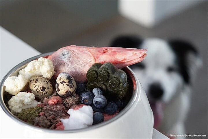 A Complete And Balanced Raw Diet For Your Dog