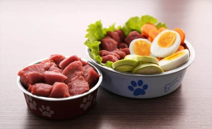 Raw Dog Food Pros and Cons
