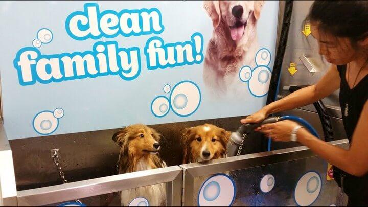 5 mint DIY Dog Washer