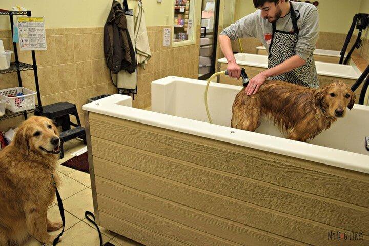 DIY Dog Washer Idea
