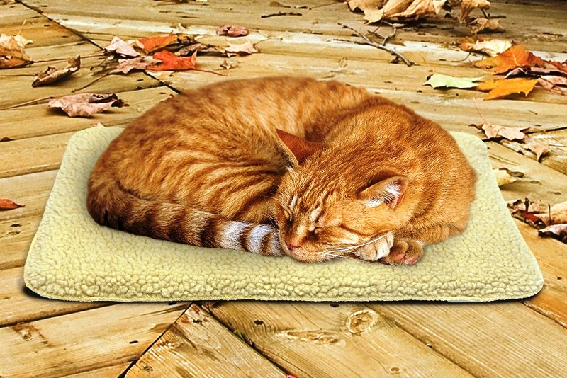 DIY Heating Items for Cats