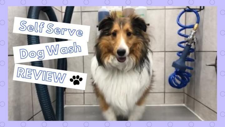 DIY Self Serve Dog Wash