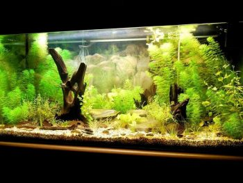 How Has Technology Changed The Aquarium Hobby