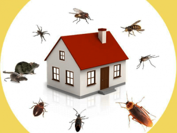 6 DIY Pest Control Tips Tricks