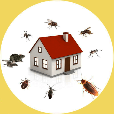 6 DIY Pest Control Tips Tricks