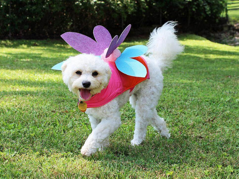5 Best DIY Dog Costume Ideas For All Puppy Lovers