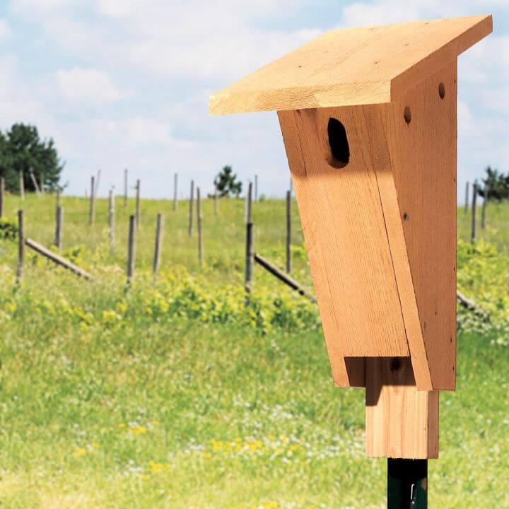 Build a Bluebird House