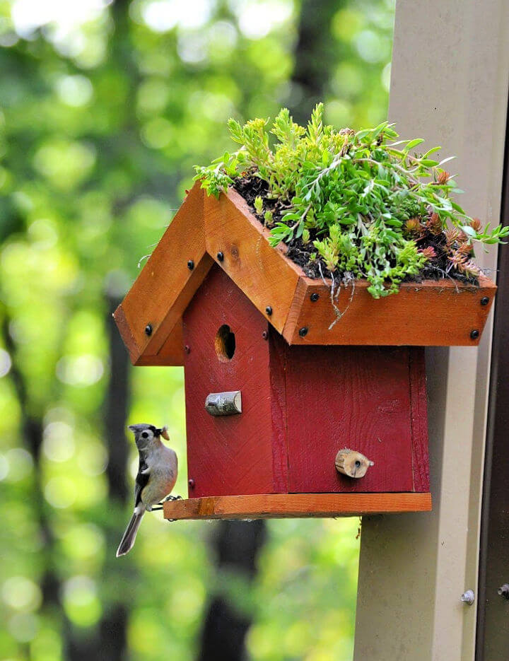 DIY Living Roof Birdhouse