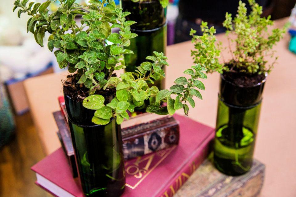 DIY Self watering Wine Bottle Planters