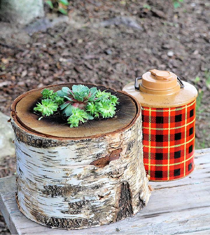 DIY Succulent Log Planter