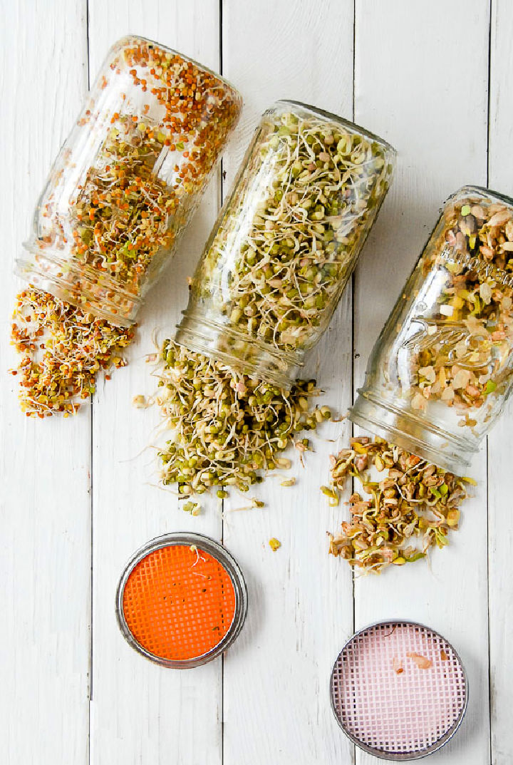 Homemade Sprouting Jars