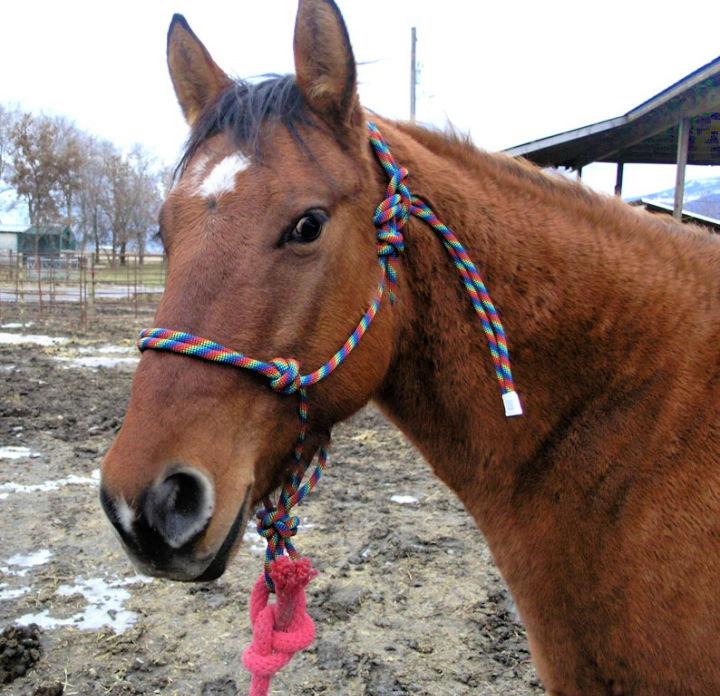 Paracord Halter Horse
