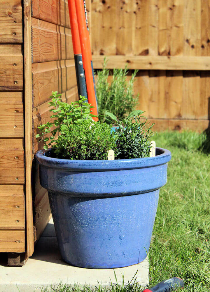 Plant Pot Herb Garden