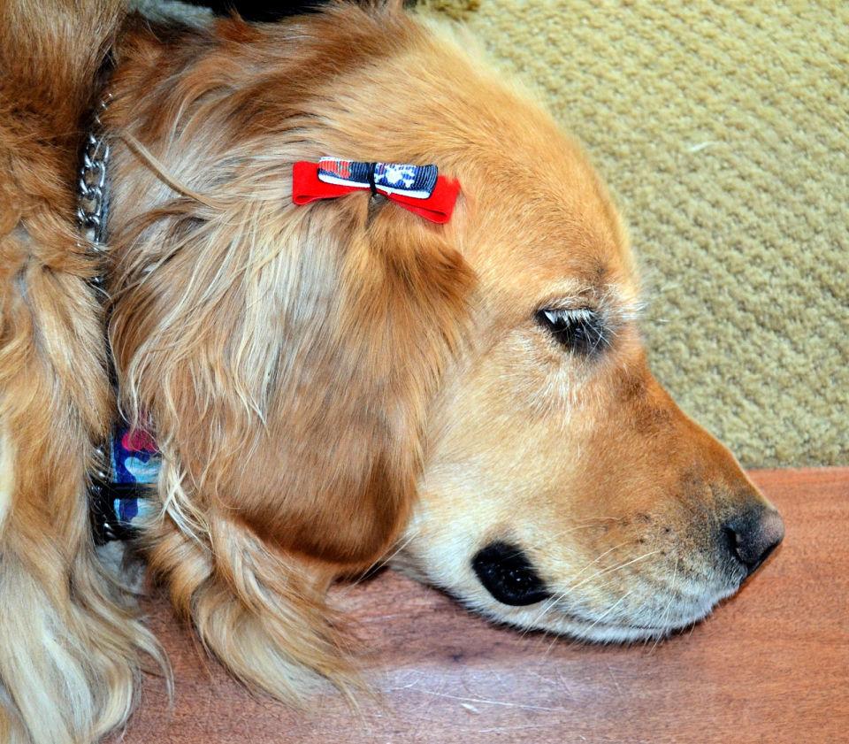 Dog Hair Bow Tutorial