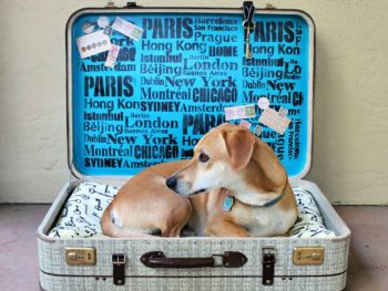 Repurpose an Old Suitcase Into Pet Bed