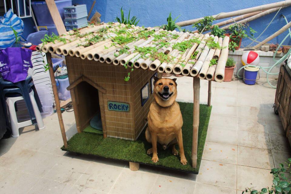 Tropical Dog House