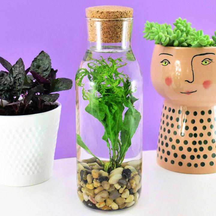 Water Terrarium in Glass Bottle