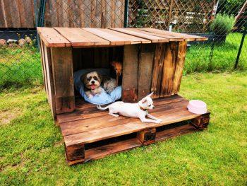Pallet Wood Dog House