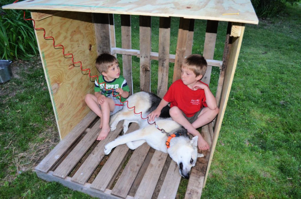 Wooden Pallets from Dog House