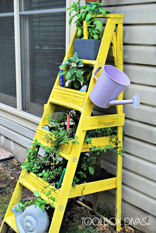 Old Wooden Ladder Into Herb Garden