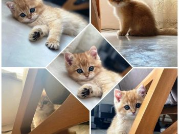 What Your Cat Needs to Feel Comfortable In the Home1