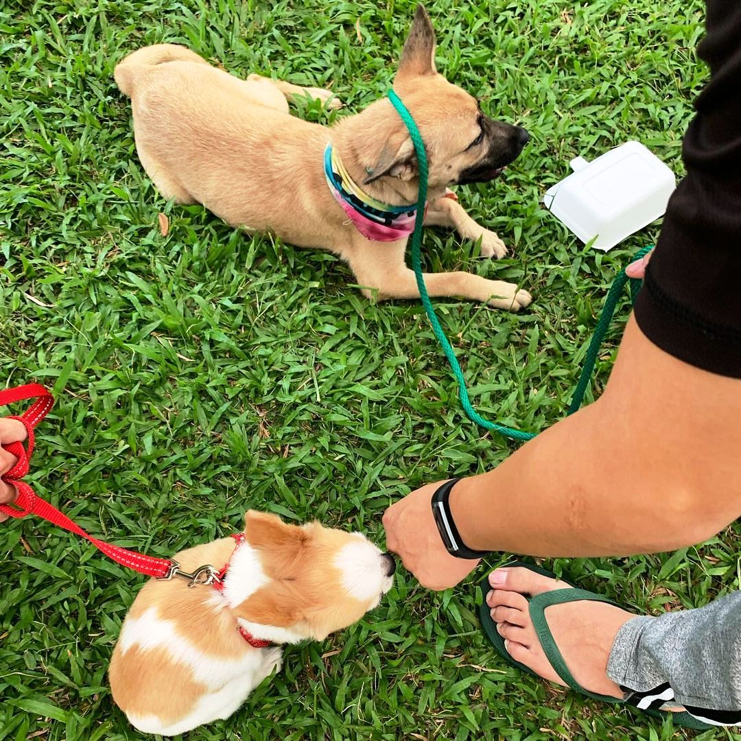 Top Things To Consider When Keeping Your Dog Outside