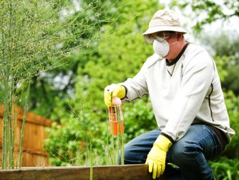 Choose The Right Exterminator And Pest Control Services
